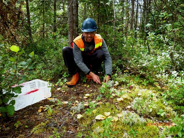 Des résultats prometteurs pour la coop Champignons Nordiques