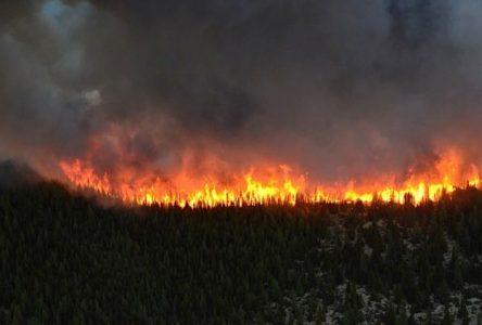 L'humain est responsable de 94% des feux de forêt en juillet