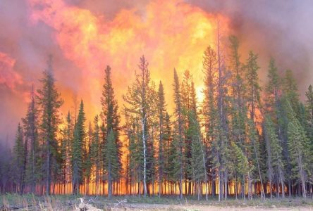Danger extrême de feux de forêt au Saguenay—Lac-Saint-Jean