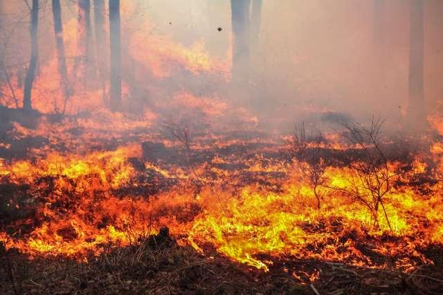 Australie : Sydney menacée par un incendie majeur