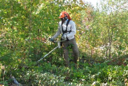 Les forêts de Produits forestiers Résolu au Lac-Saint-Jean certifiées FSC