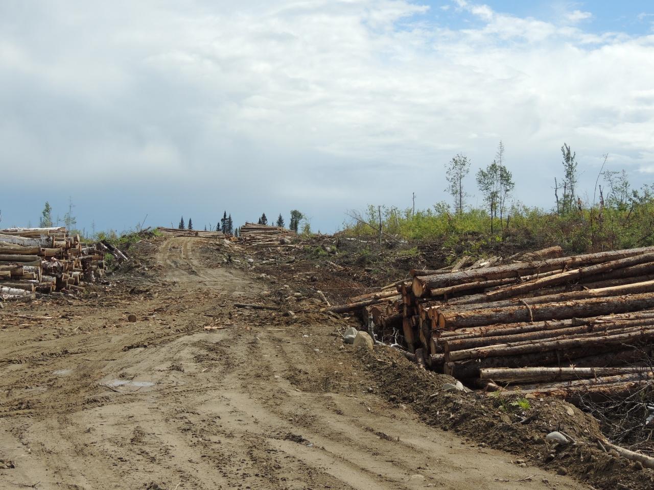 Des coupes forestières inquiétantes