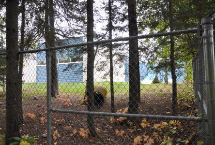 Les chiens dérangent au Cégep de Saint-Félicien