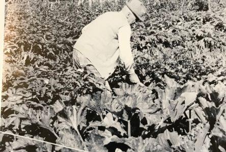 Société d'horticulture et d'écologie de Roberval  50 ans, ça se fête!