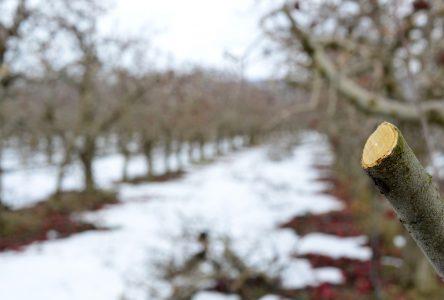 Les travaux d'arboriculture en hiver