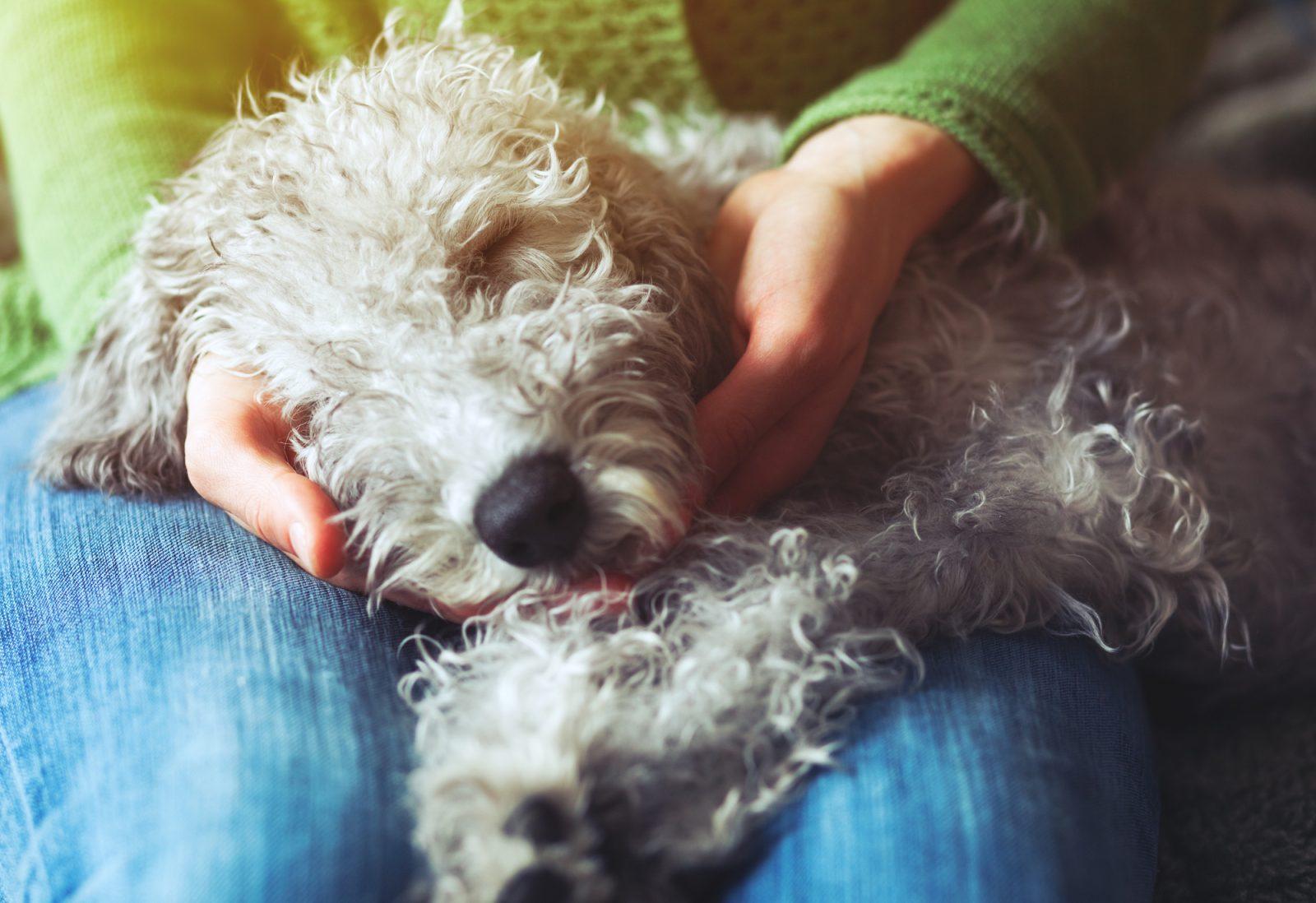 Gastro-entérite nosocomiale chez le chien