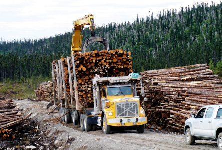 Une récolte forestière record pour la MRC Domaine-du-Roy