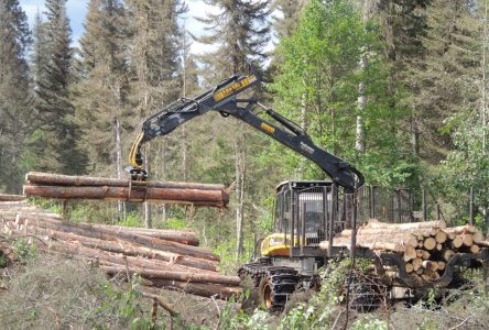 Secteur forestier : Québec devance les versements du PRCM