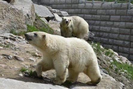 Le Zoo sauvage s'adapte pour accueillir les visiteurs
