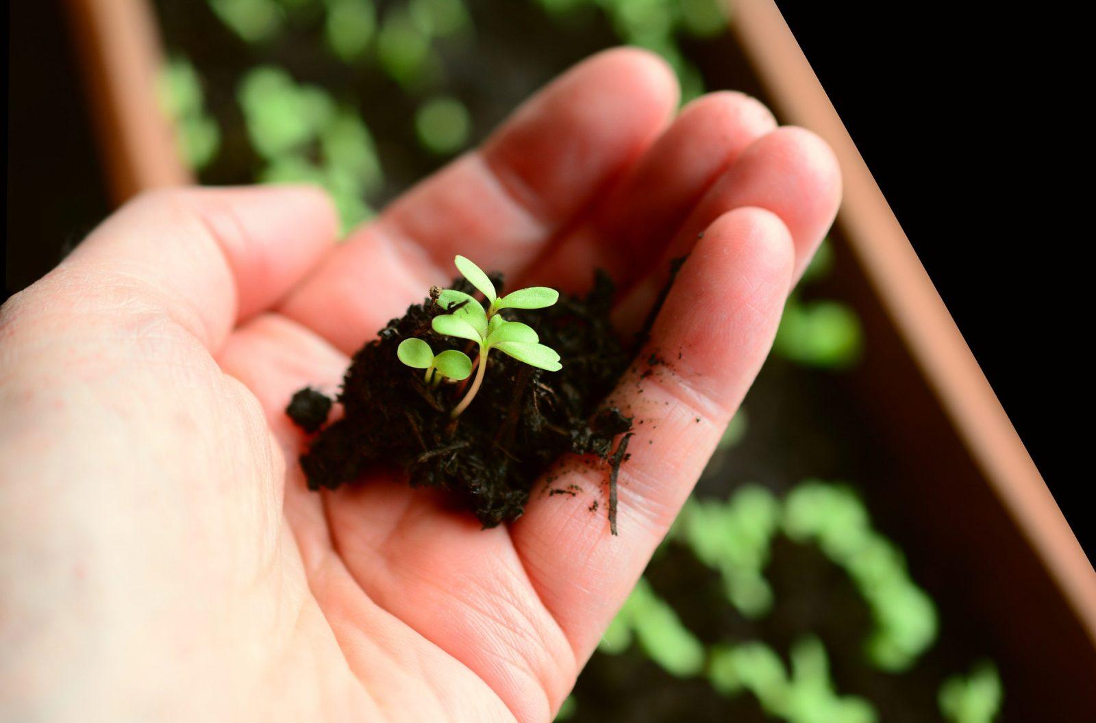 Devenez des pros du jardinage en pot