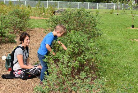 Forêt et jardins nourriciers de Roberval : un havre de paix au coeur de la municipalité