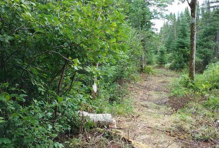 Piste cyclable La Doré-Saint-Félicien :La saga se poursuit