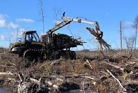 Régime forestier : l'industrie en attend davantage