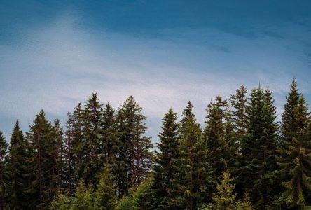 Forêt: un plan vert pour créer des emplois