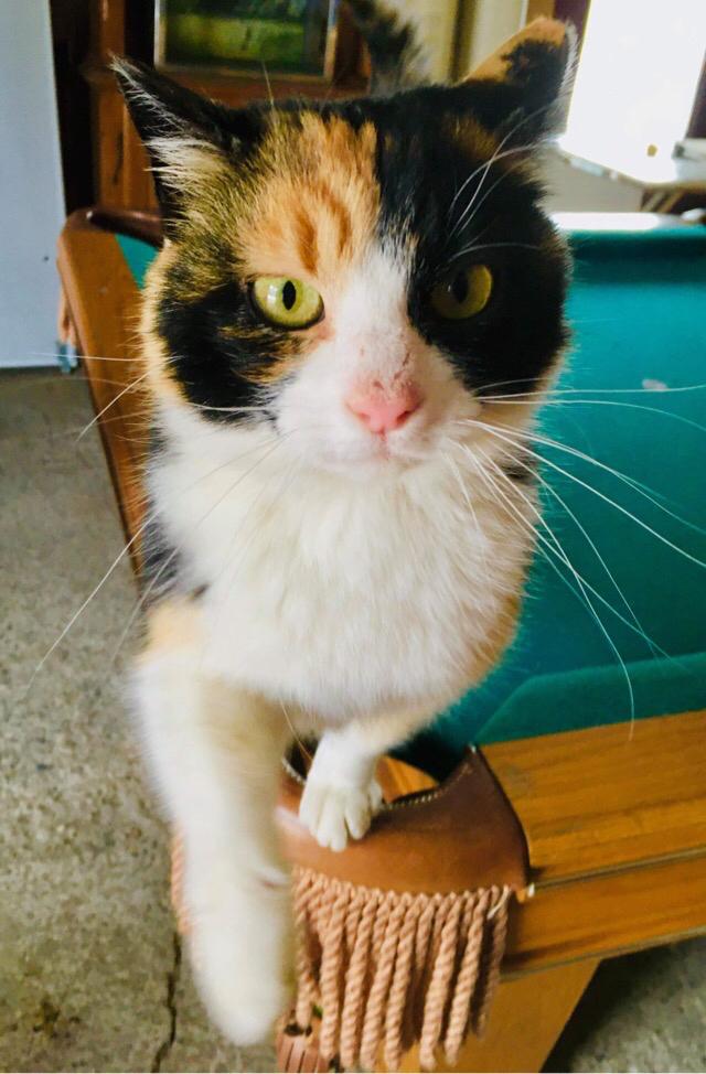 Des chatons pour égayer la vie des aînés