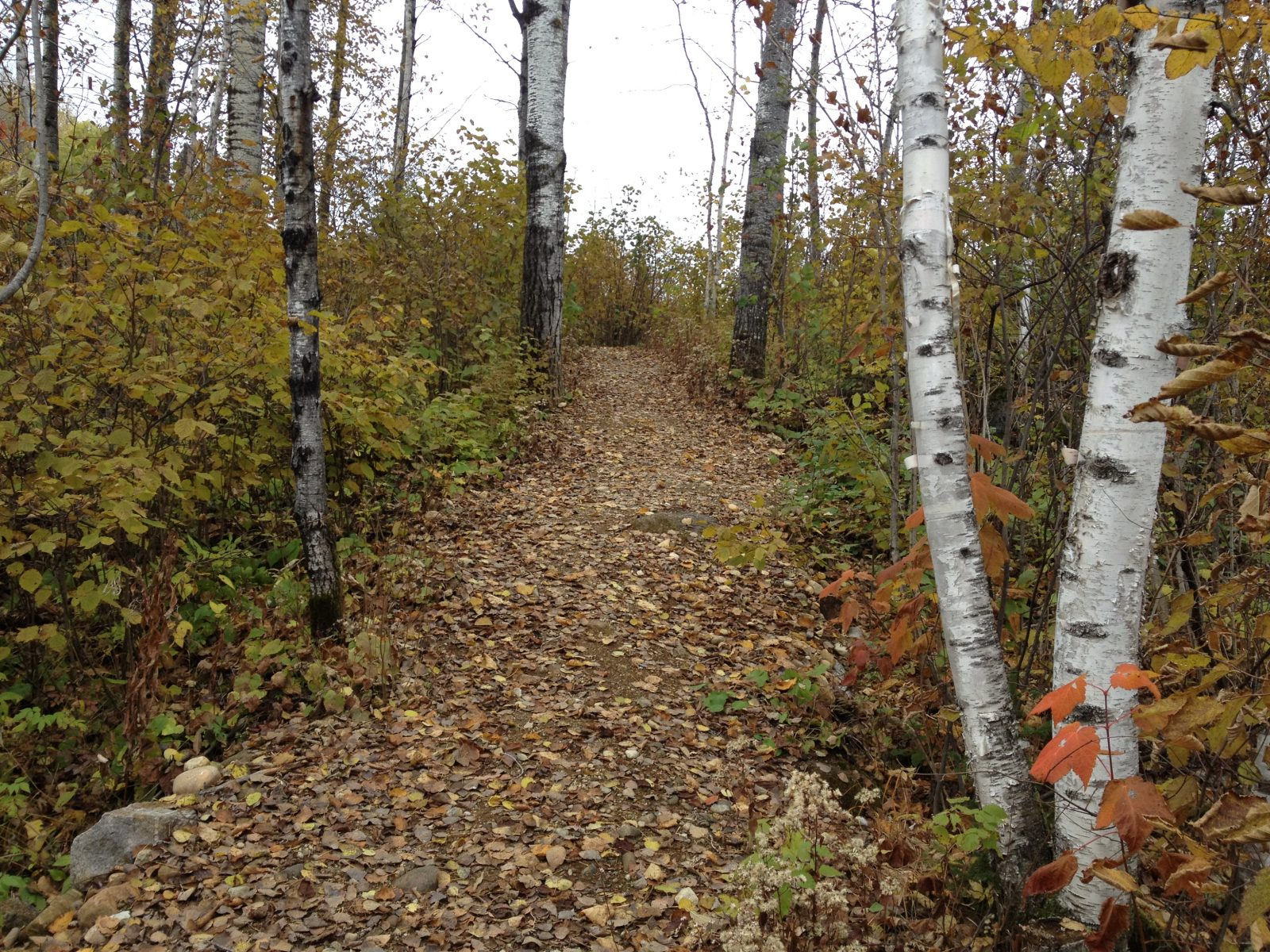 Davantage d'autonomie réclamée dans la gestion des forêts