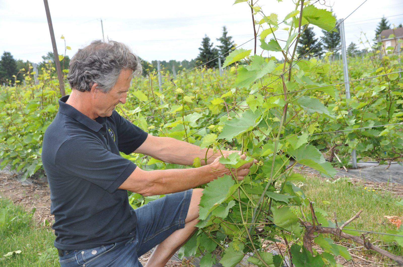 Vignobles: vers une année exceptionnelle