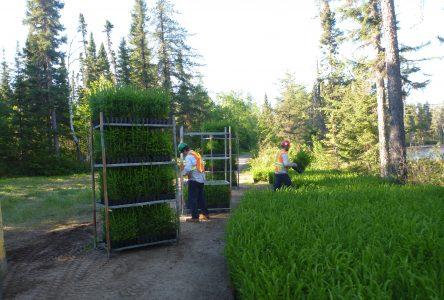 La Coopérative de solidarité forestière de la Rivière-aux-Saumons a le vent dans les voiles
