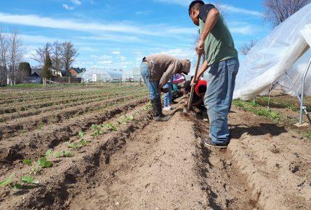Les producteurs agricoles exigent le partage de main-d'œuvre