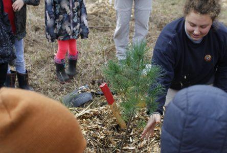 École Carrefour étudiant: Une mini forêt-école prend racine à Saint-Méthode